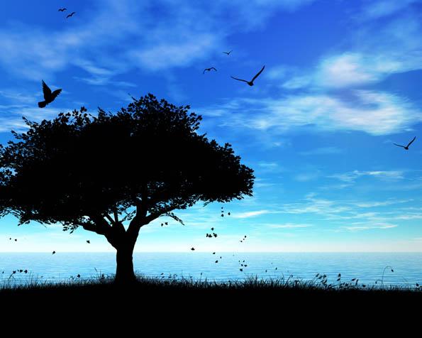 Volba: tapeta v rozlišení 1280 x 1024 - Čertův strom