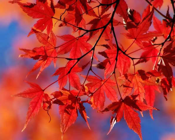 Obrázek na plochu v rozlišení 1280 x 1024 - Podzimní paleta