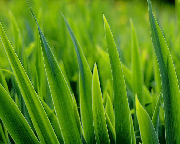 Obrázek na plochu v rozlišení 1280 x 1024 - Čerstvá tráva