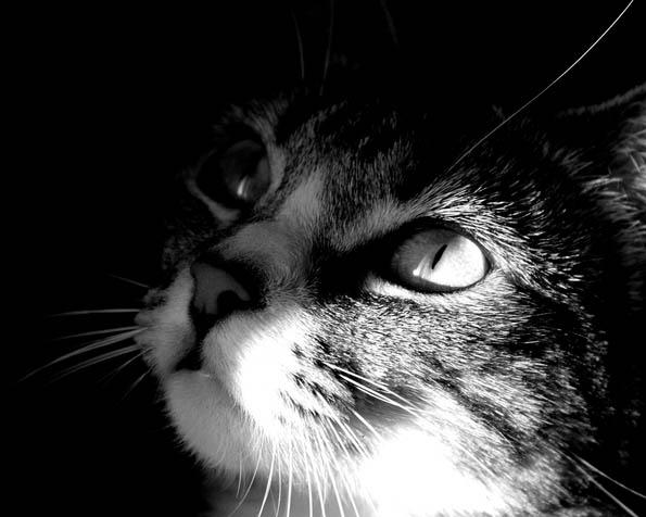 Obrázek na plochu v rozlišení 1280 x 1024 - Kočka v detailu