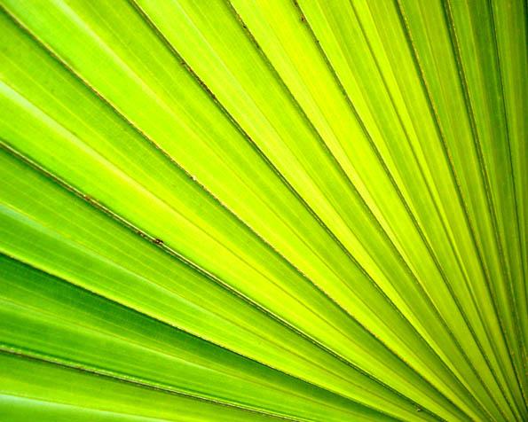 Obrázek na plochu v rozlišení 1280 x 1024 - Palma