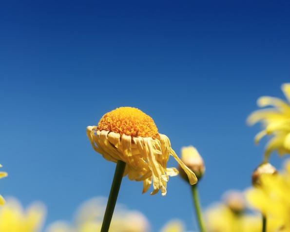 Obrázek na plochu v rozlišení 1280 x 1024 - Zvadlá květinka